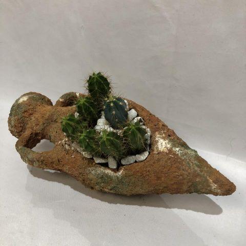 Cactus Compo Tinaja Vieja