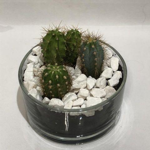 Cactus Compo 3 Cristal Redondo 15cm