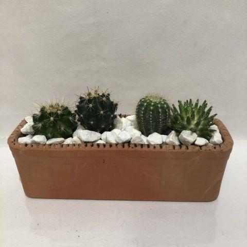 Cactus Compo 4 jardinera barro 30cm