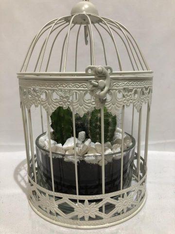 Cactus compo Jaula con cristal