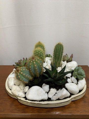 Compo Cactus Plato 30 Bons 8c